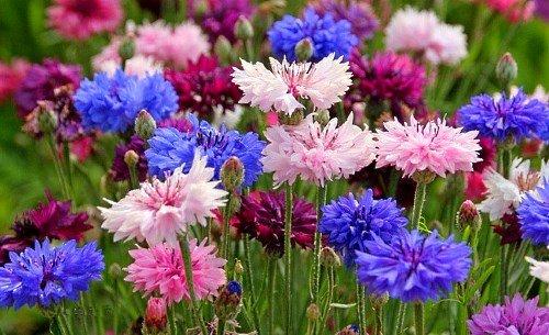 Белые цветы цветущие все лето фото и