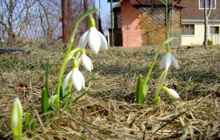 Картинки садів ранньої весни