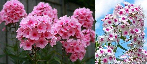види квітів фото і назва