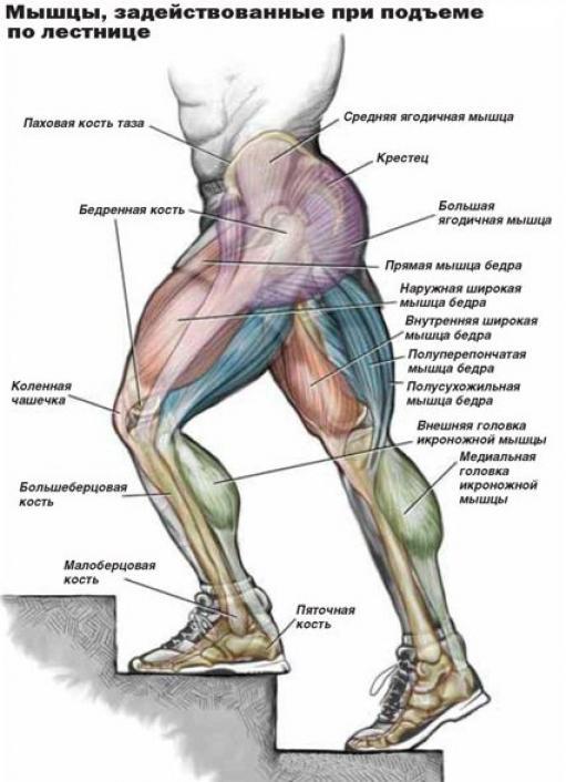вид женщины на голени немеет мышца неопалимая Сергей Булгаков