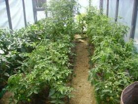 Сад і огород