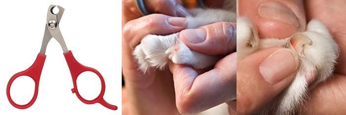 Как подстригать когти коту в домашних условиях 172
