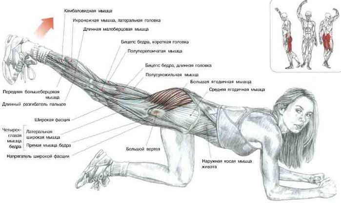 Похудеть мышцы в домашних условиях 952