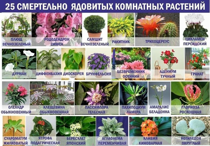 Список всех растений мира по алфавиту