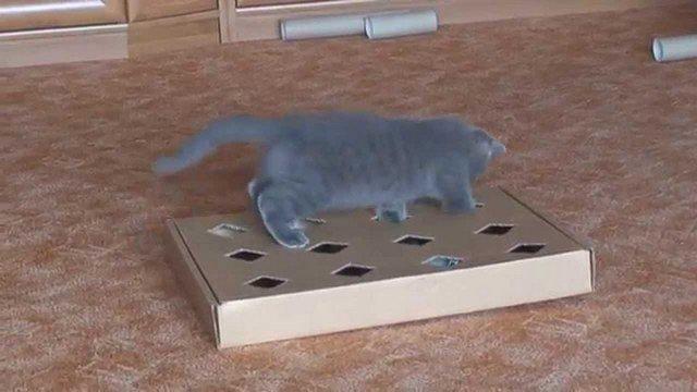 Игрушки для котят своими руками в домашних условиях легко и быстро 91