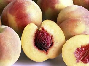 Вирощування персика: посадка, обрізка і щеплення