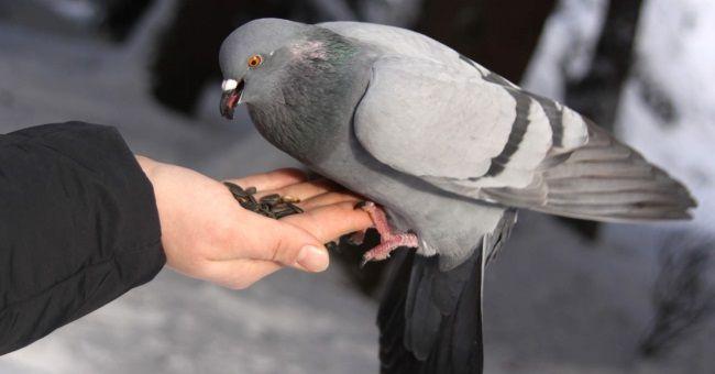 Птичка села на руку примета