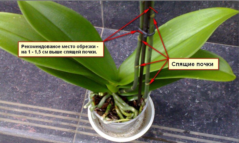 Як доглядати за орхідеєю в домашніх умовах