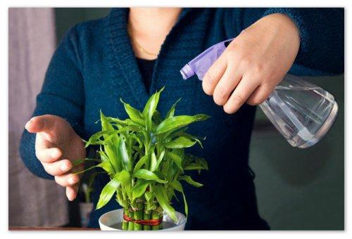 Выращивание комнатные растения 95