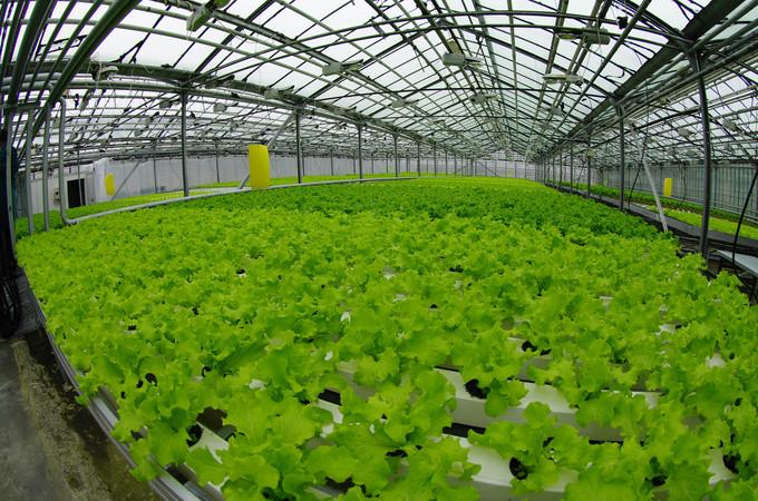 Бизнес выращивание 52