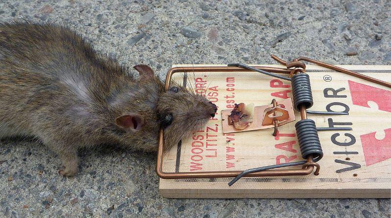 Поймал мышь своими руками